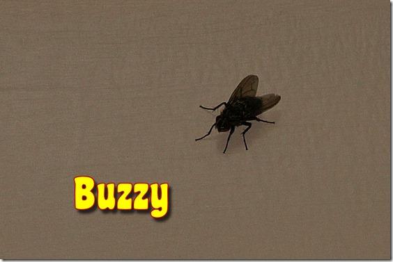 Buzzy 0
